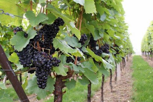 Wine tour (5)
